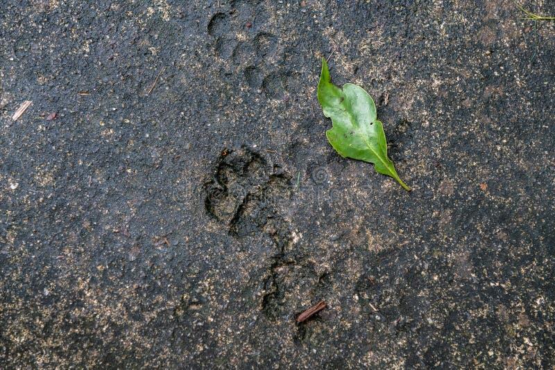从动物,狗,在沥青的猫的踪影 动物踪影在街道瓦片、纹理和背景,灰色混凝土的 免版税库存图片