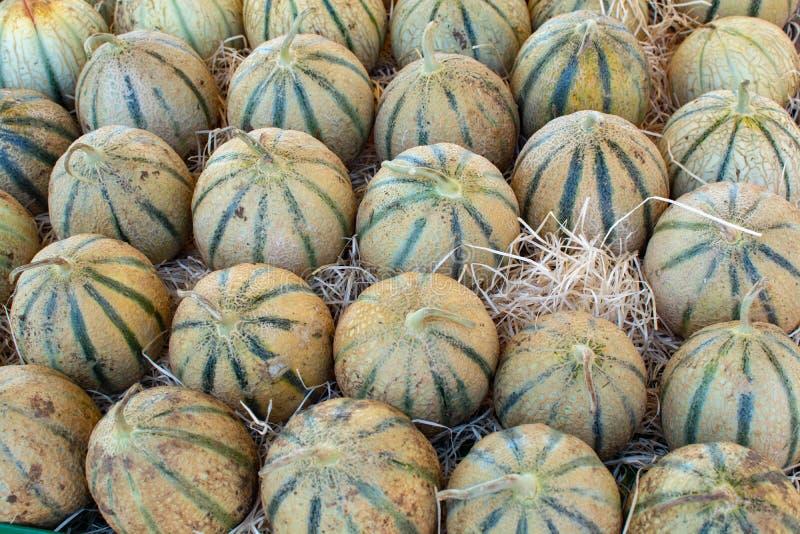 从卡瓦永,成熟圆的charentais蜂蜜甜瓜的瓜我 免版税库存照片
