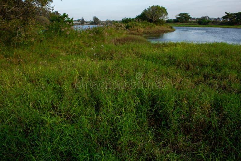 从印度卡纳塔克邦迈索尔KRS大坝的Brindavan花园桥看卡韦里河岸 水源自克里希纳拉贾萨加拉大坝 库存图片