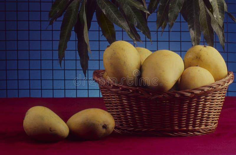 从印度的Banganapalle芒果 免版税库存图片