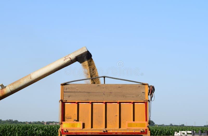 从卸载机到卡车里,伏伊伏丁那,塞尔维亚的倾吐的大麦 免版税图库摄影
