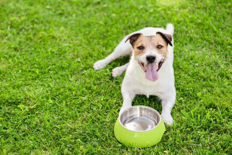 从变冷静热的夏日的小狗碗的狗饮用水 图库摄影