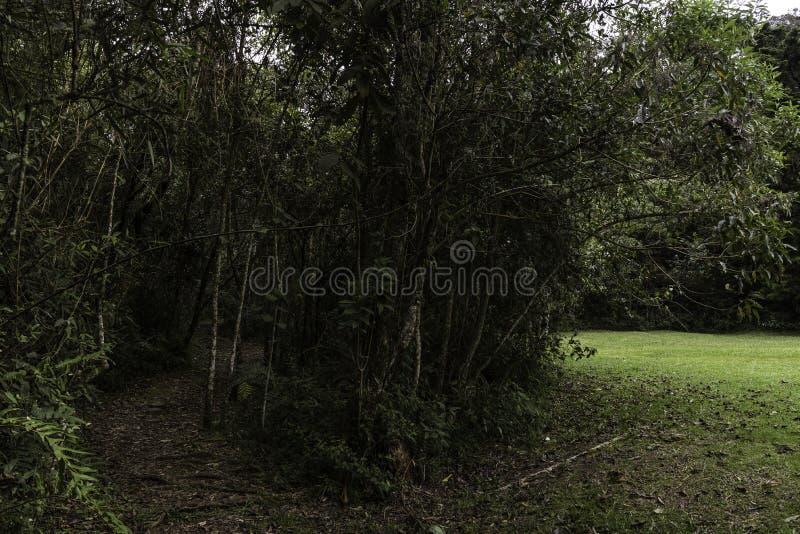 从哥伦比亚的热带雨林 免版税库存照片