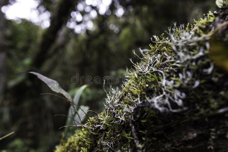 从哥伦比亚的热带雨林 免版税库存图片