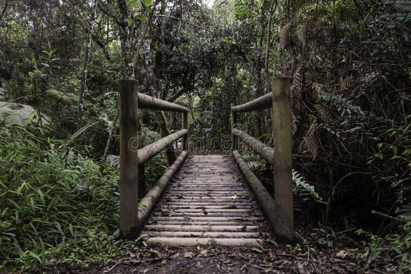 从哥伦比亚的热带雨林 免版税图库摄影