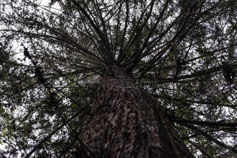 从哥伦比亚的热带雨林 图库摄影