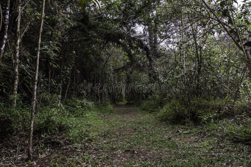 从哥伦比亚的热带雨林 库存照片