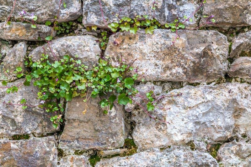 从外面石墙的背景 免版税库存照片