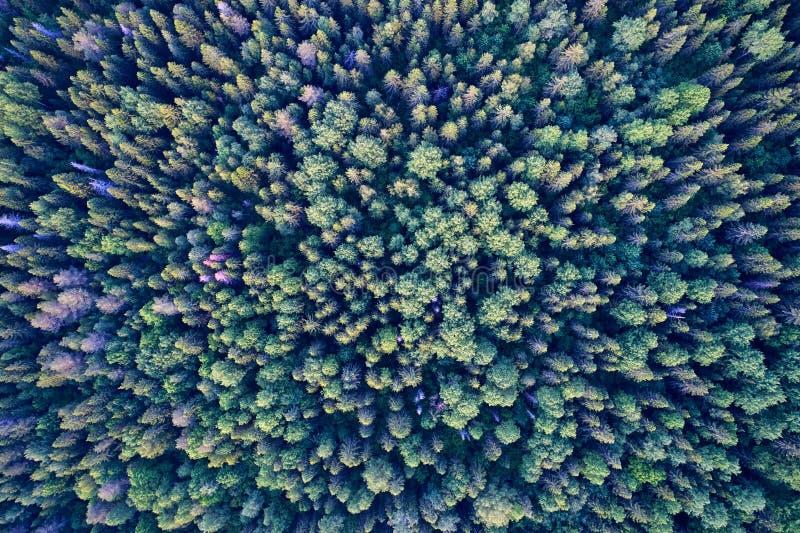 从寄生虫的航拍 与绿色森林的风景 库存照片