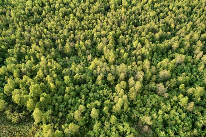 从寄生虫的航拍 与绿色森林的风景 图库摄影