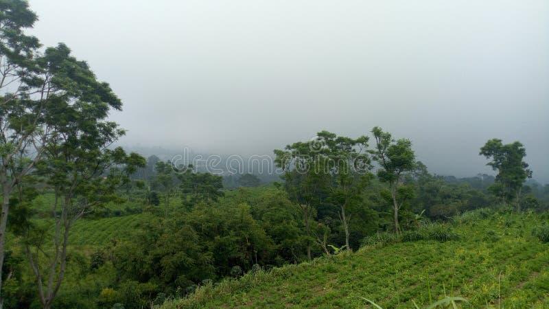 从小山顶的森林 免版税库存照片