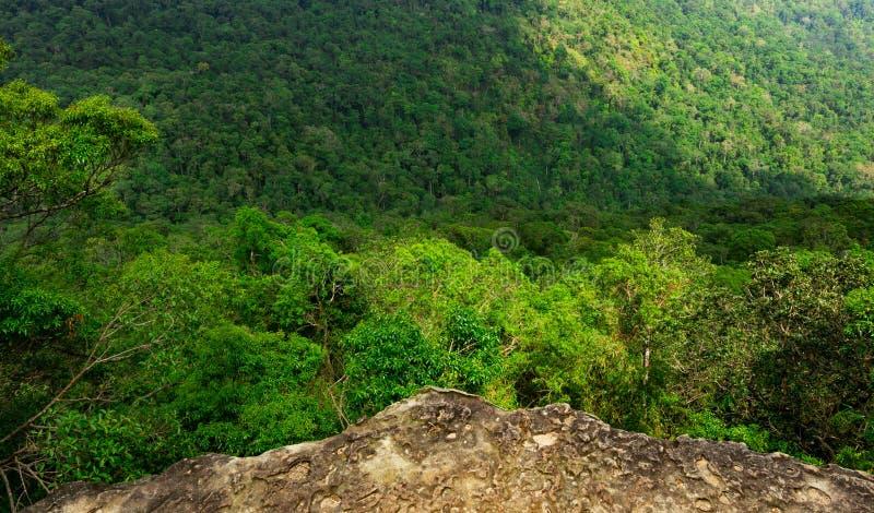 从峭壁峰顶的美丽的景色在山的在热带森林背景中 生态系和健康环境 免版税库存图片