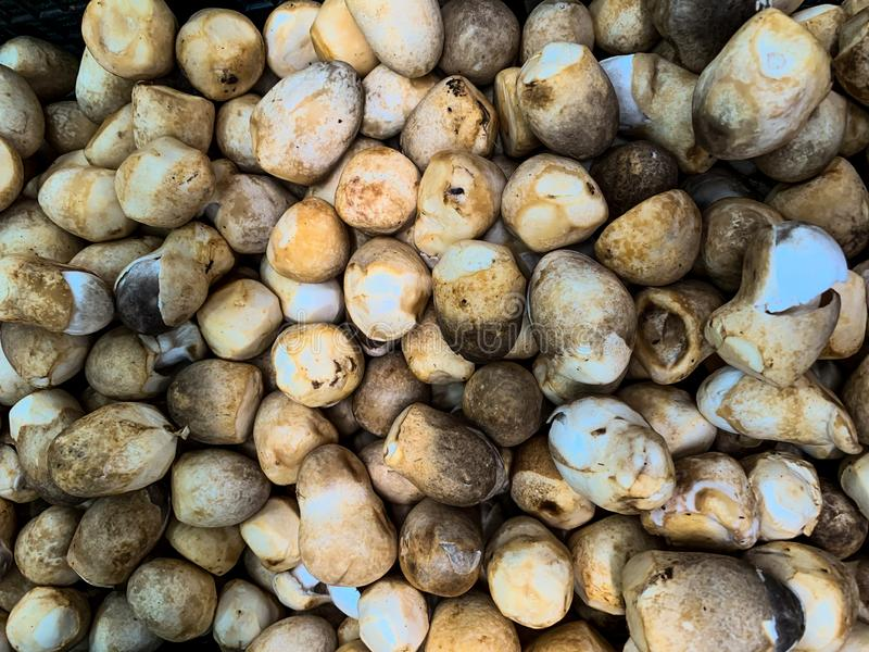 从市场摊位的草菇在泰国 免版税图库摄影