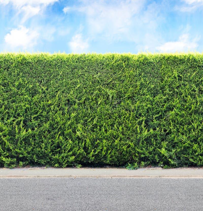 从常绿植物的绿色树篱有天空和石渣路的 海 库存图片