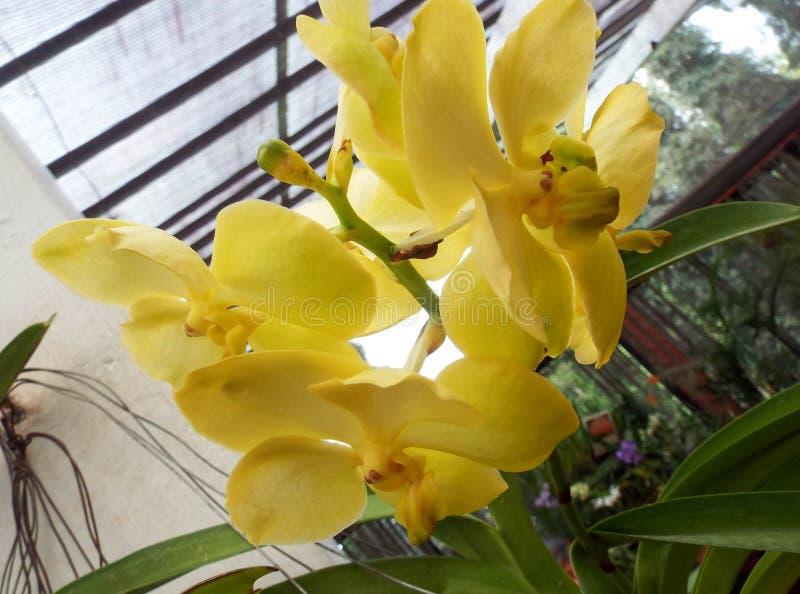 从庭院的新鲜的庭院花 库存照片