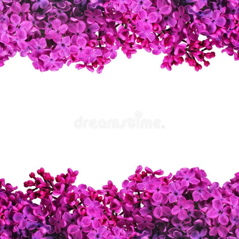 从开花的紫色丁香的框架 库存照片