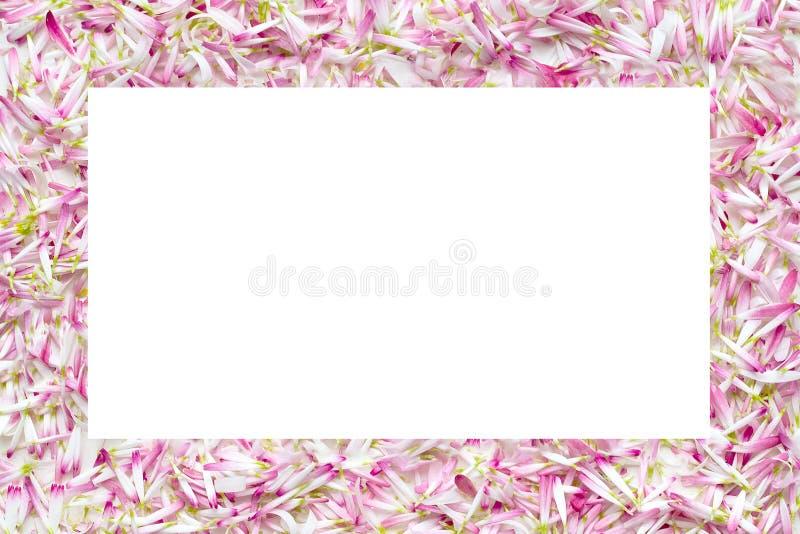从很大数量的瓣雏菊的孤立框架 库存照片