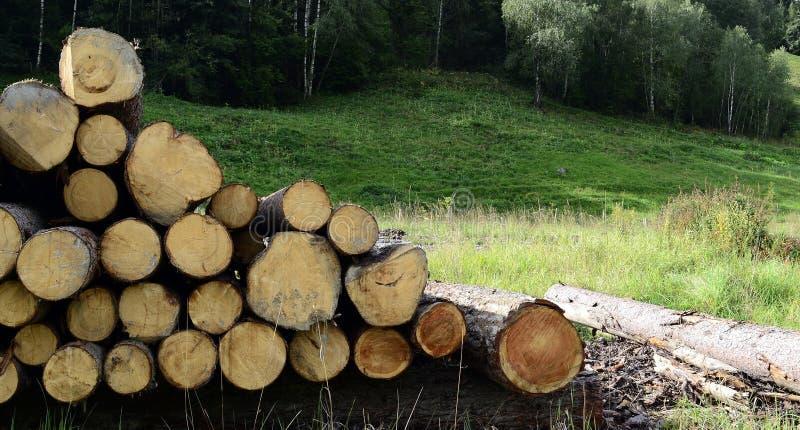 从放置在绿草的树的新鲜裁减日志在山腰区域 免版税图库摄影
