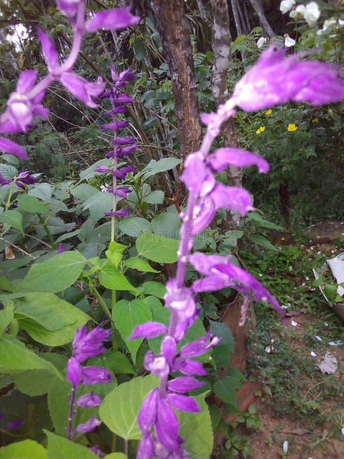 从斯里兰卡的野花 免版税库存图片