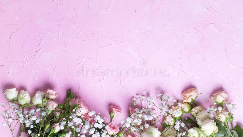 从新鲜的白色gypsofila的边界和在桃红色织地不很细背景的白色玫瑰色花 库存图片