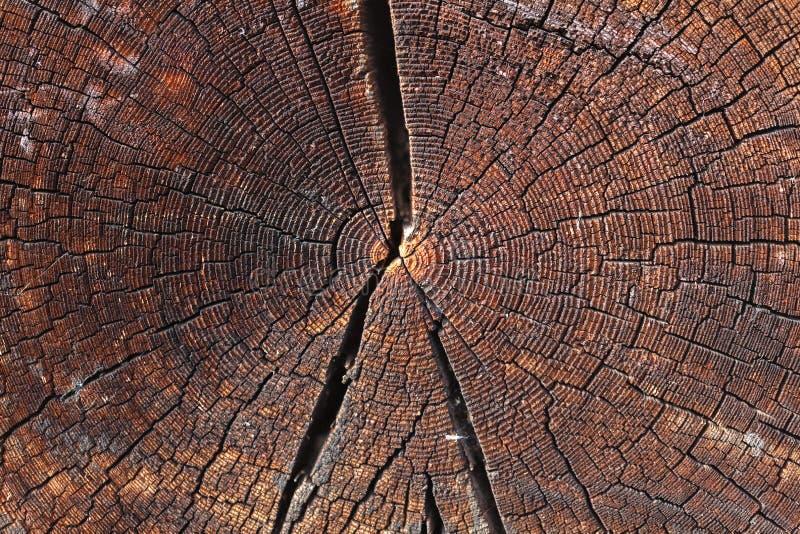 从日志的木墙壁作为背景纹理 免版税图库摄影