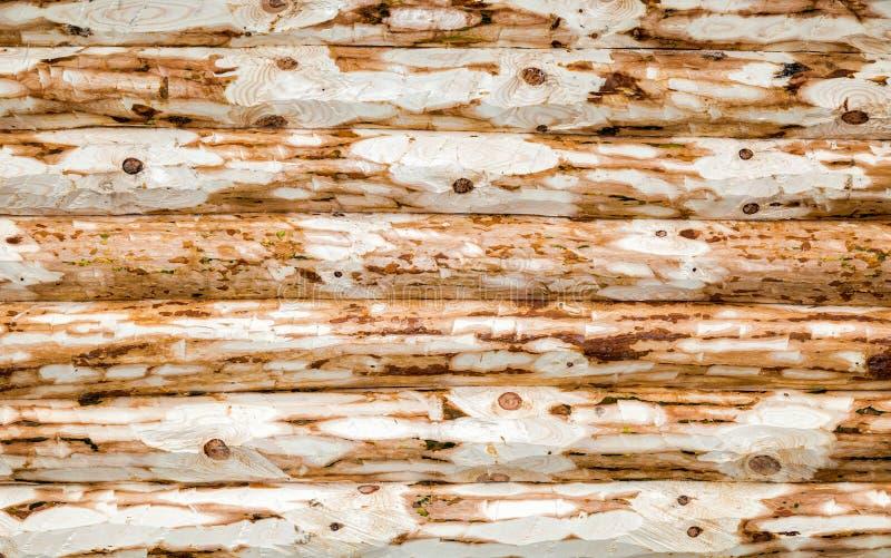 从日志的木墙壁当背景纹理 库存图片