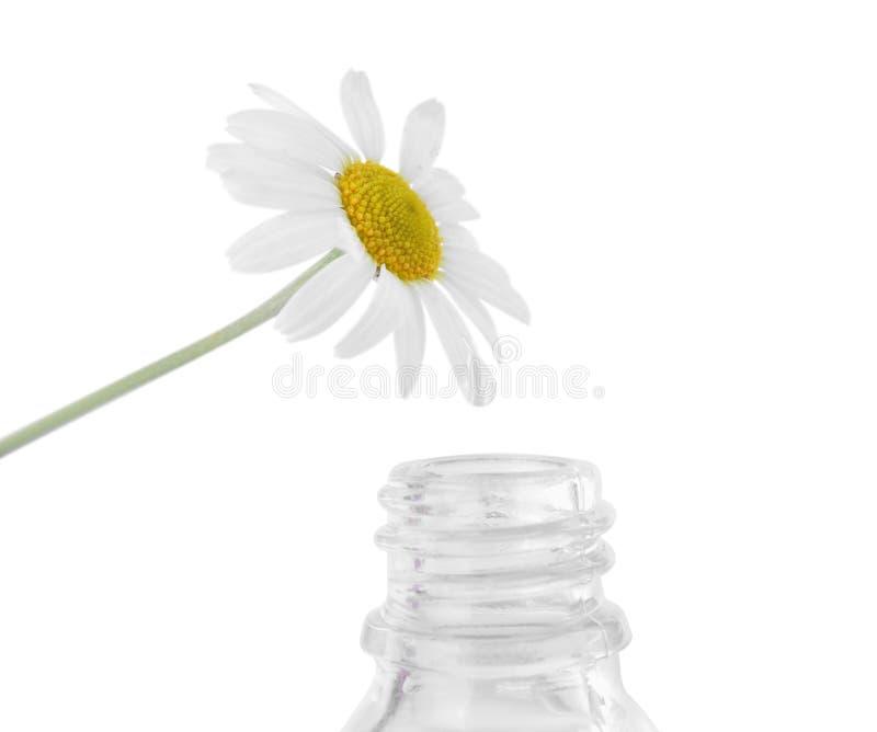 从春黄菊下降跌倒入精油被隔绝的瓶 免版税库存图片