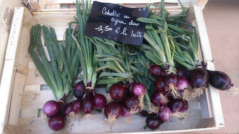 从普罗旺斯的法国葱 库存照片