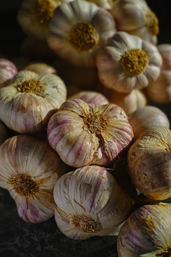 从普罗旺斯,法国的新鲜的法国紫罗兰色和玫瑰色大蒜 库存照片