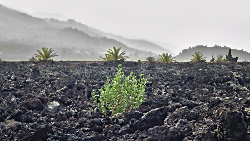 从最后火山爆发的一个大熔岩石scree风景在加那利群岛的西部的拉帕尔玛岛 库存图片