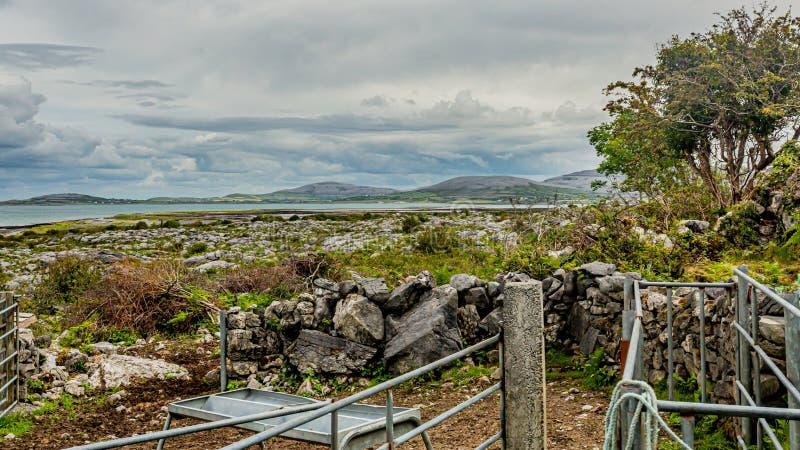 从有小山的一个农场和海看的石灰石风景在背景中 免版税库存图片