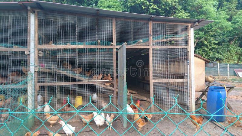 从木头修造的鸡舍 免版税库存照片