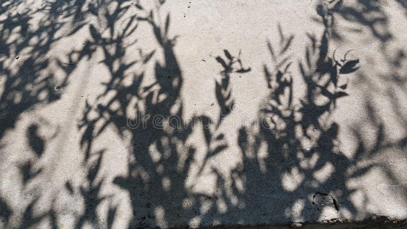 从柳树叶子的单色阴影 库存照片