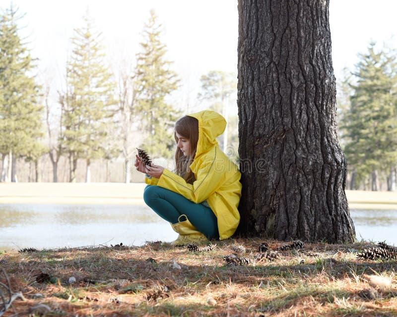 从树外看松果 库存图片
