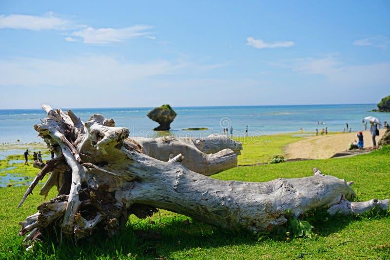 从树干的海滩 库存照片