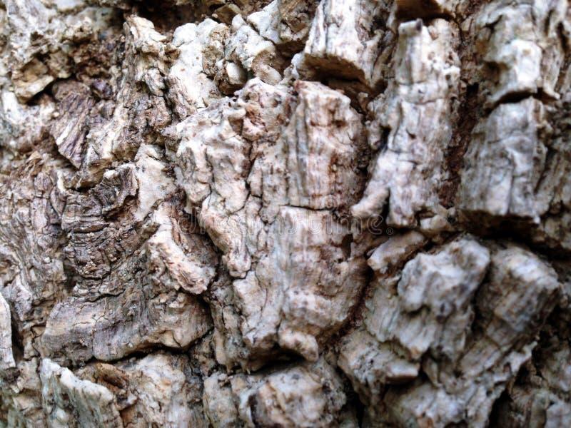 从树的吠声的背景 免版税图库摄影