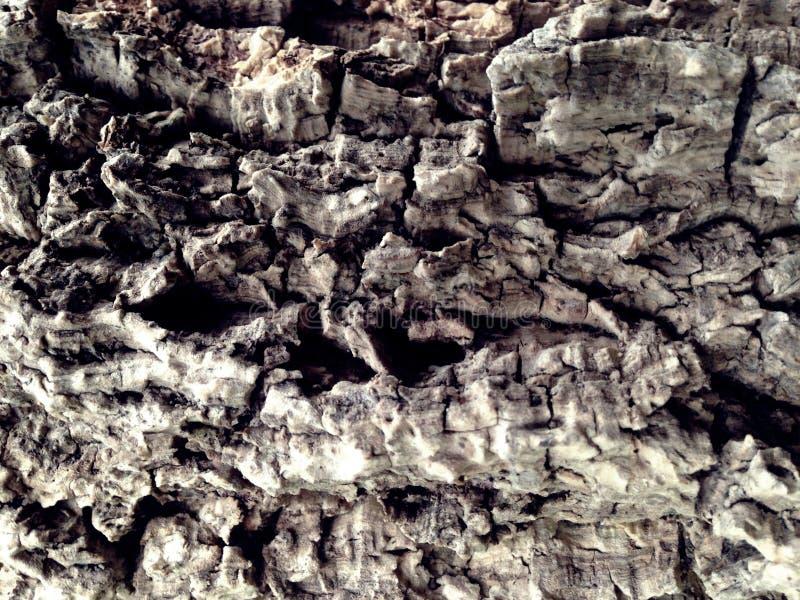 从树的吠声的背景 库存图片