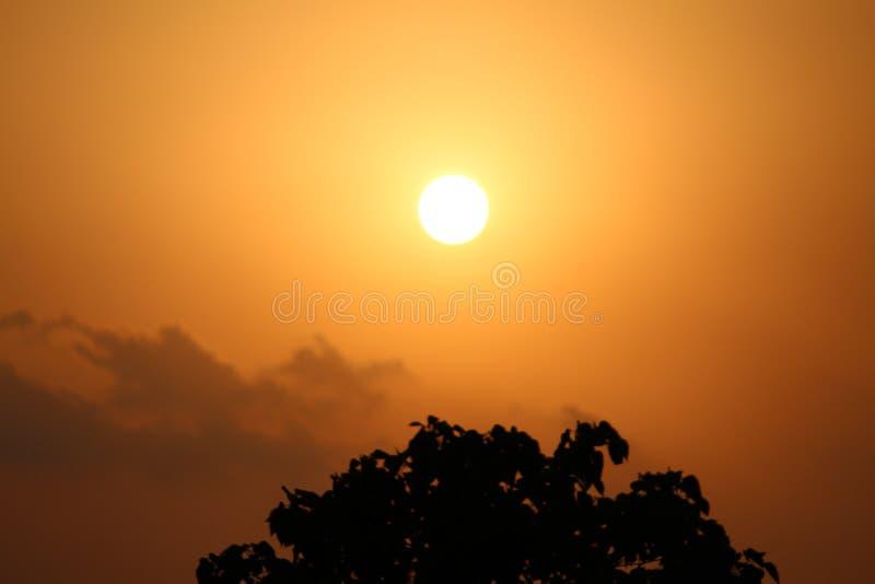 从树的罕见的太阳集合Pic作为下来对象 库存图片