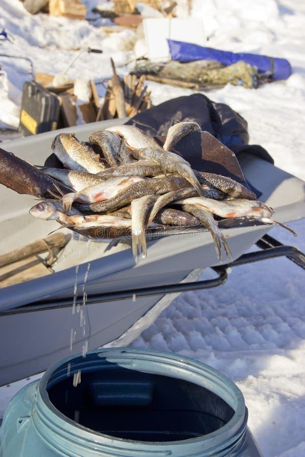 从桶的鱼凹道 库存照片