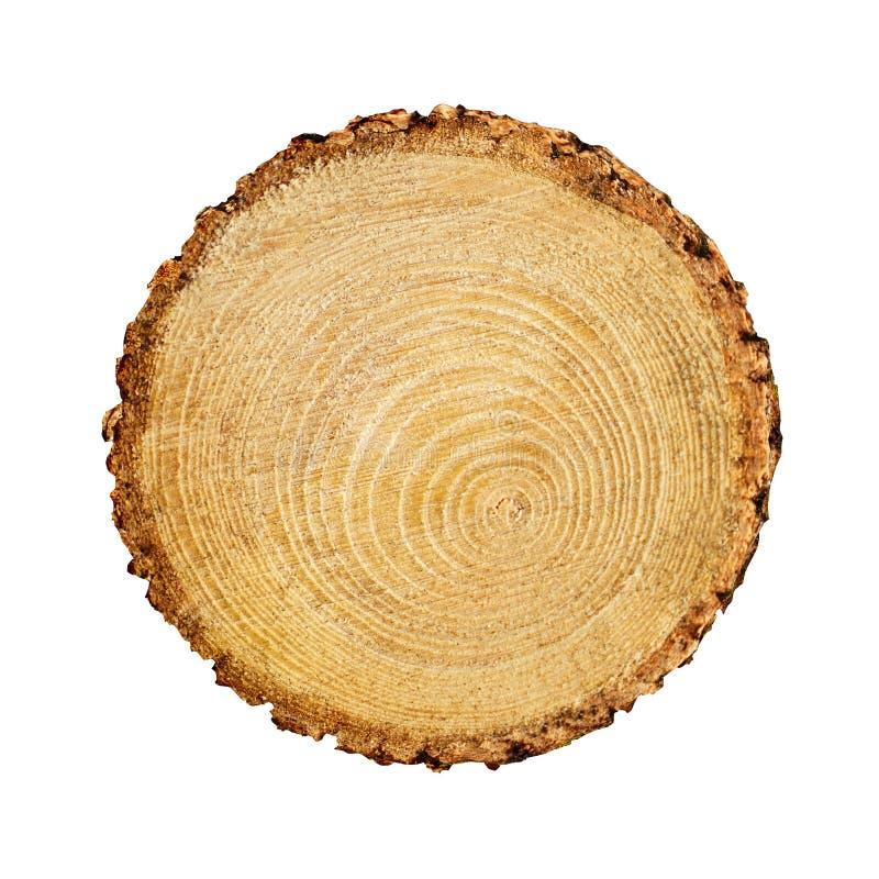从森林削减的大槭树切片 与圆环和镇压的织地不很细表面 中立棕色背景由硬木制成 图库摄影