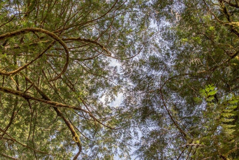 从森林地板的树木天棚 库存照片