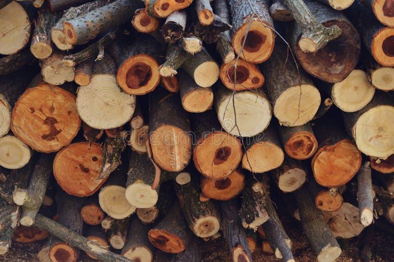 从森林的树 免版税图库摄影