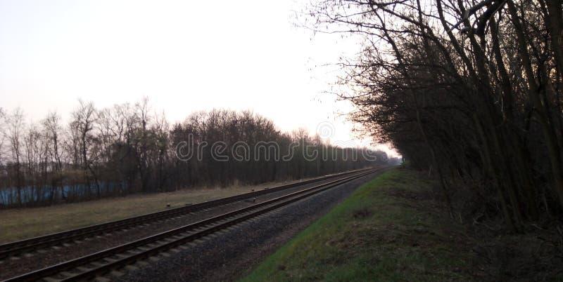 从森林的看法铁路的 免版税图库摄影