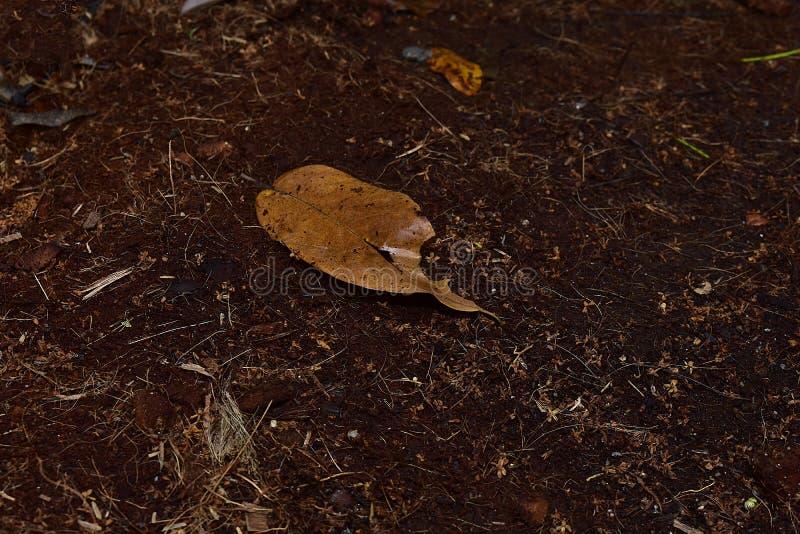 从椰子壳的肥料 免版税图库摄影