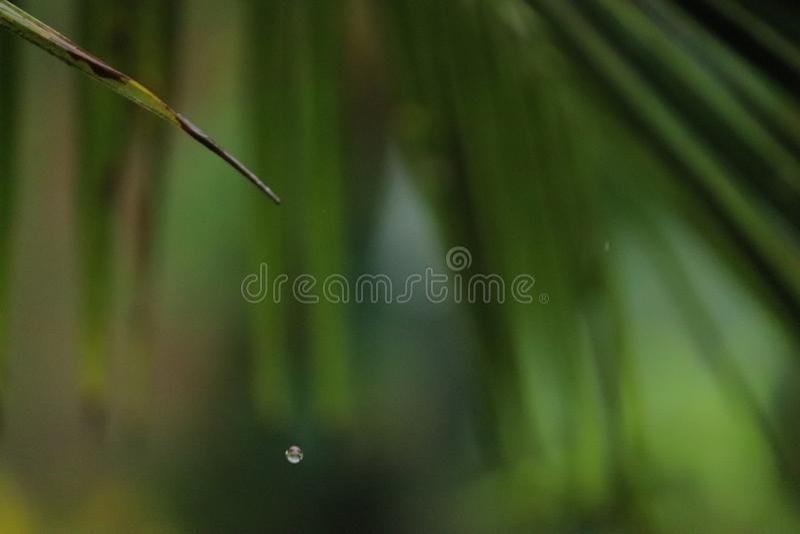 从椰子的一片唯一绿色叶子的水水滴 免版税库存图片