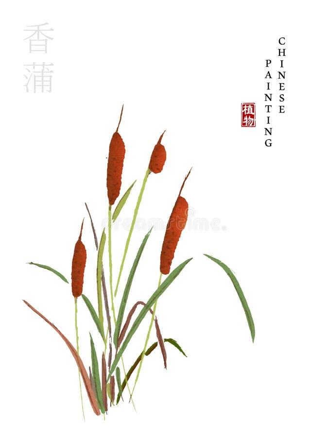 从歌曲东方猫尾巴书的水彩中国墨水油漆艺术例证自然植物  中国人的翻译 库存例证