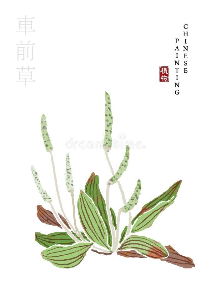 从歌曲庭院杂草书的水彩中国墨水油漆艺术例证自然植物  中国词的翻译 库存例证