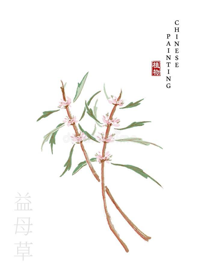 从歌曲益母草书的水彩中国墨水油漆艺术例证自然植物  中国词的翻译: 库存例证