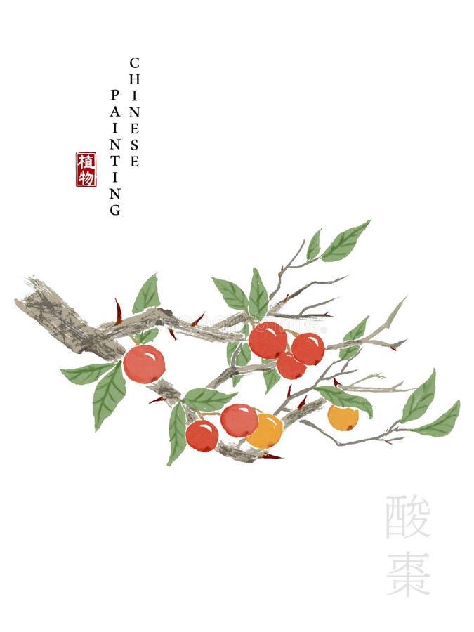 从歌曲酸枣书的水彩中国墨水油漆艺术例证自然植物  中国词的翻译: 皇族释放例证