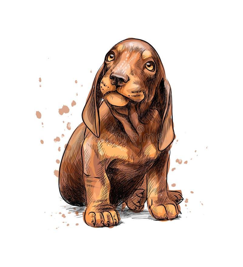 从水彩,手拉的剪影飞溅的达克斯猎犬小狗  向量例证